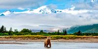 A bear standing in water at Hallo Bay with mountains in background