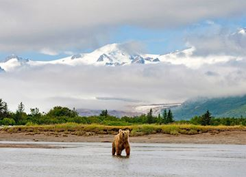 A grizzly bear crosses a low river in the snowy mountains of Alaska.
